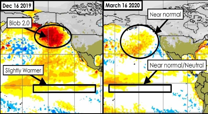 """The so called """"Blob 2.0"""" was an area of the Pacific Ocean where the surface temperature was 5.5 to 9°F (3 to 5°C) above normal. This area dissipated and by early January conditions on the right side of the graphic prevailed and led to a return of near normal winter conditions."""